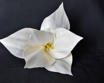 Raw Sola Wood Lily Flower