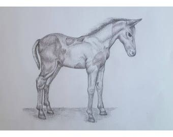Foal - Signed Limited Edition A4 Print of an original pencil drawing.