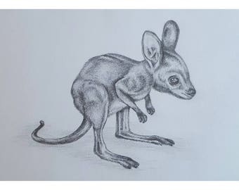 Joey - Signed Limited Edition A4 Print of an original pencil drawing.