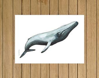 Blue Whale, Watercolor Illustration, Giclée Print, A3 A4 or A5 size