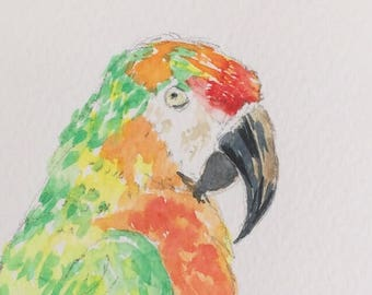 Parrot ORIGINAL Miniature Watercolour ACEO Wildlife, Bird, Green Parrot, Zoo, For him, For her, Home Decor Wall Art Gift Idea, Free shipping