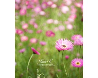 Flower Field, Fine Art Photography Print, Multiple Sizes, Flower Photography