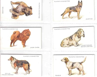 Complete Set of 50x Original Cigarette / Tobacco Cards - 'DOGS' by Arthur Wardle- issued by John Player c1931