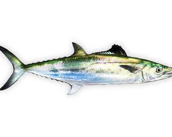 Spanish Mackerel, Mackerel Fishing, Mackerel Decal, Mackerel Sticker