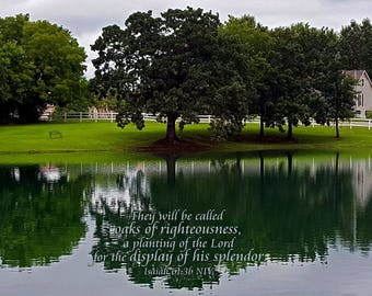 Kansas City Scenic Oaks with Scripture 'They will be called oaks of righteousness, a planting for the display of His splendor.' Isaiah 61