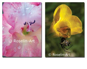 Lot 2 postcards, flowers