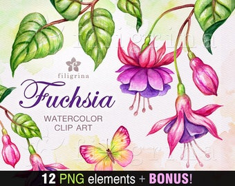 FUCHSIA watercolor Clip Art. Blooming pink flowers green leaves, botanical illustration nature elements, branch, butterfly. Read about usage