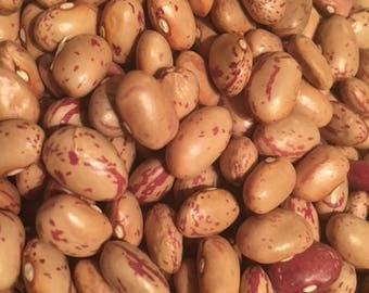 Lina Sisco's Bird Egg Bean