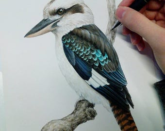 Laughing Kookaburra A4 size archival art print - limited edition