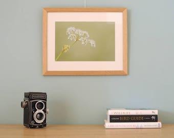 Photographic Art Print framed Cow Parsley Botanical Nature