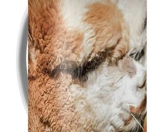 Alpacas #2