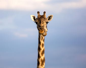 Photo of a giraffe in the Maasai Mara, Kenya