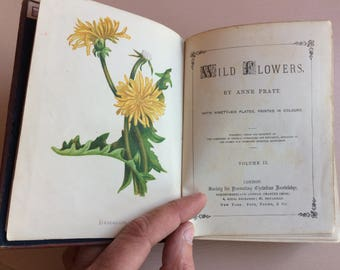Victorian Book, Wild Flowers, Anne Pratt, Volume II, Pretty Colour Plates, Illustrations - Society for Promoting Christian Knowledge
