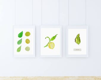 A5, lemon, Wall art, Decoration, Home decor, Print, Mural Art, botanical, watercolor, herbarium, hand drawn