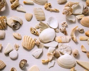 SEASHELL FRAGMENT PIECES white broken shells Coastal art Home decor Organic mantel display Mermaid tropical Vase filler instant collection