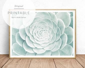 Succulent Print, Succulent Wall Art, Succulent Poster, Succulent Art, Succulent Photography, Succulent Printable, Bohemian, Southwest Decor