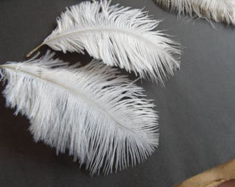 small ostrich feathers, 2, sweet and angelic!