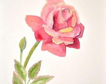 Rose In Full Bloom Study; Original Watercolor Painting, 8x10