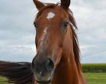 Horse expression... Surprise