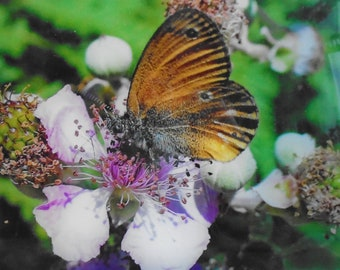 Photo nature Butterfly