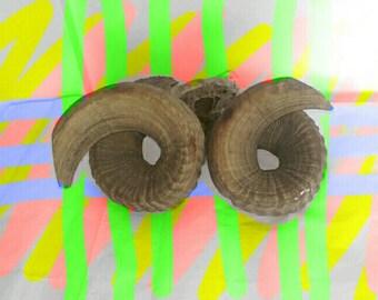 Ram Horns Untreated Folk Art