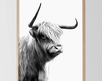 Highland Cow, Scottish Cow, Cow with Horns, Cow Print, Large Printable Art, Instant Download