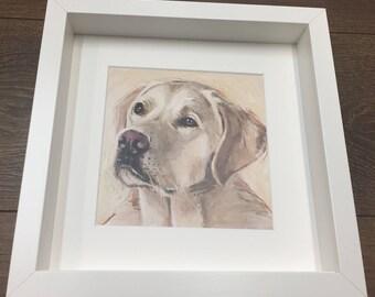 Sunny The Golden Labrador Framed Print