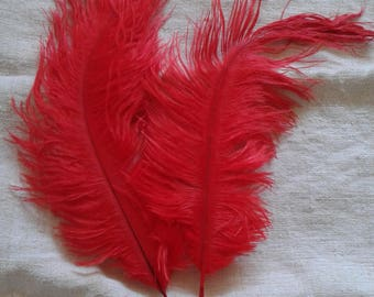 set of 2 red ostrich feathers (17-20 cm)