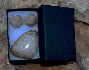 Texas Petrified Palm Wood Cabochons for pendant & earrings