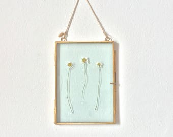 hanging glass specimen frame with daisy pressed flowers - small