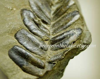 Fern fossil photograph, instant download, wall art printables, nature prints, home decor, fossil images, fern images, rustic wall decor