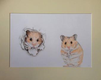 Hamster escape