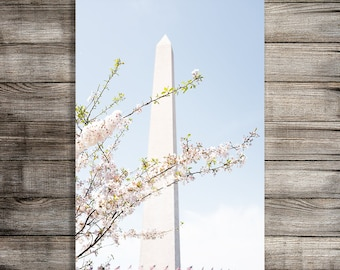 Travel Photography Printable, Washington DC Cherry Blossom Tree Print, Nature Photography, Wall Art, Digital Download