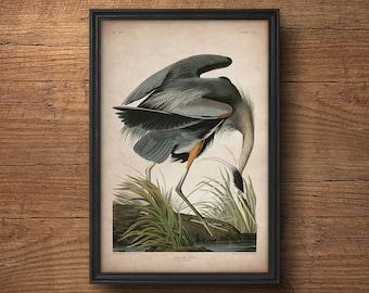 Audubon bird print, Heron print, Antique bird print, Audubon poster, Birds of America, Large wall art, Nursery art, Wall decor, Large art