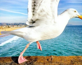 Spread your Wings - Seagull Bird Animal Photograph Print, Wildlife, Ocean, Water, Beach Life, Courage, Home Decor, Wall Art, Photography