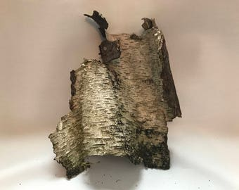 White Birch Bark with a hint of green
