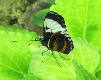 Nature photograph - Butterfly on leaf