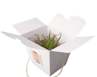 La Boîte à Nouilles Chinoises Succulente Blanche et Corde Naturelle : cadeau aux invités personnalisé, mariage, baptême, anniversaire