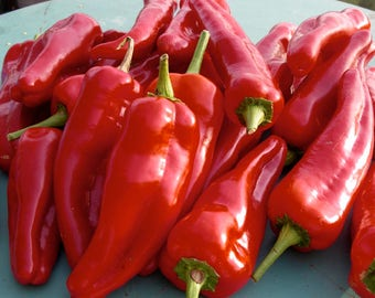 Sweet Red Pepper 50 Seeds NonGMO Organic Own Production Italian Variety Vegetable Seeds