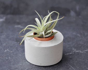 Air Plant Holder - Concrete Air Planter