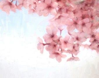Sakura, Japanese Cherry Blossom