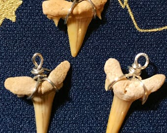 Shark week; wire wrapped shark tooth pendent