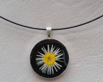 Choker + pendant round 2.5 cm resin and dried Daisy flower
