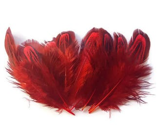 Red pheasant feathers