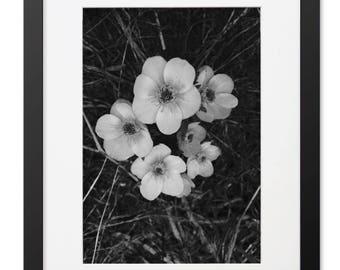 Black and White Flower Framed Print