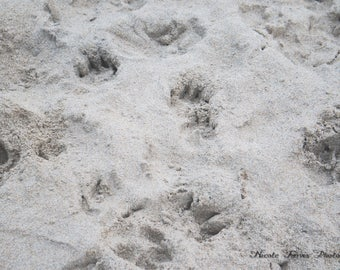 Paw Prints in the Sand Downloadable Photograph