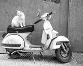Cat on a Vespa Blank Gree...