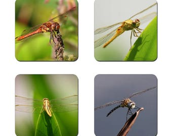 Set of 4 Dragonfly drinks coasters featuring award winning photography by UniquePhotoArts.