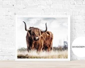 Highland Cow Print, Farm Animal Wall Art, Scottish Cow Print, Animal Print, Cow Photography, Cattle Print, Digital Download, Cow Decor
