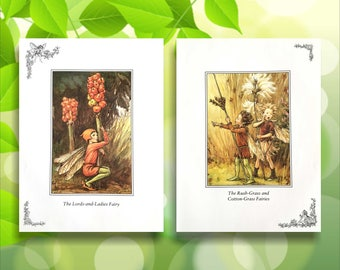 Rush-Grass, Cotton-Grass & Lords-and-Ladies Flower Fairy Print from vintage book. Fairies Nursery themed gift. Illustration for framing